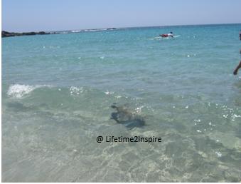 turtle blue water